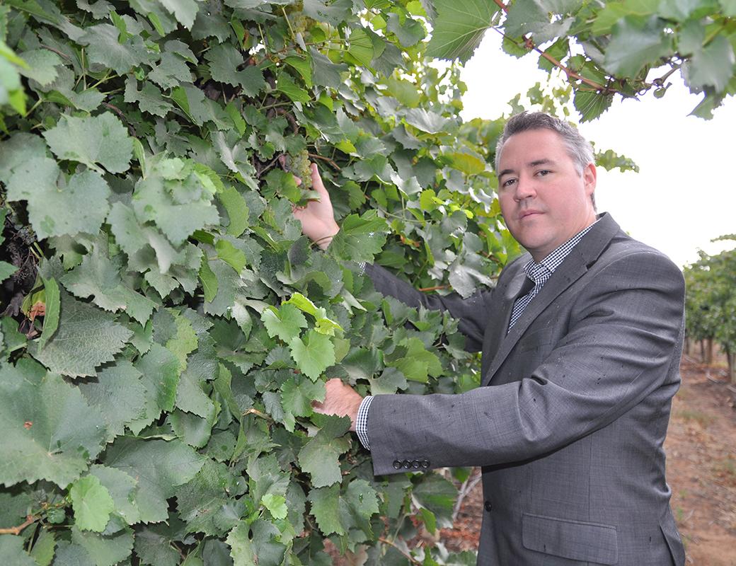 Sean Cole grape vines