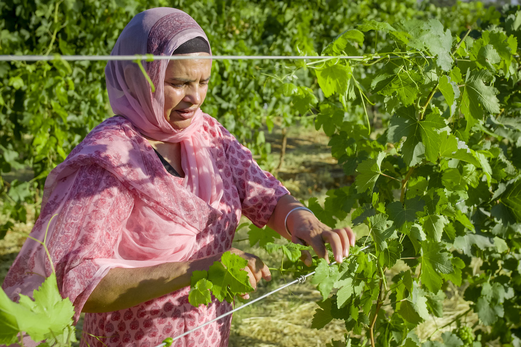 Lady at grape vines