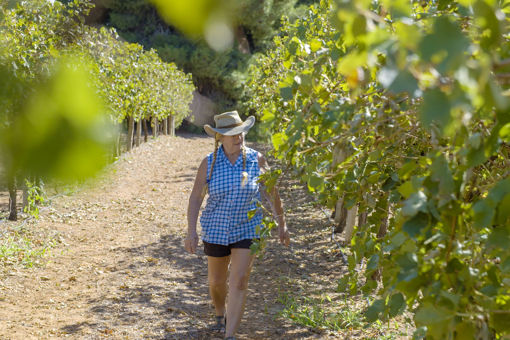 Marg walking by grape vines